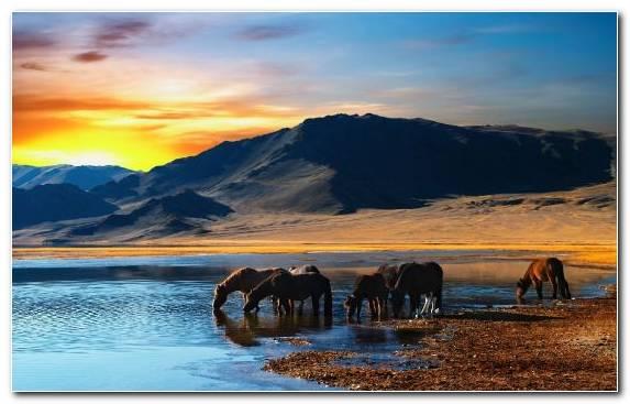 Image Sunrise Mongolian Horse Nature Nomad Sky