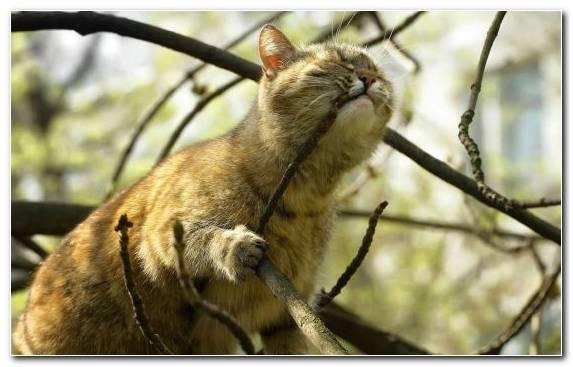 Image Tabby Cat Canada Lynx Snout Fauna Eurasian Lynx