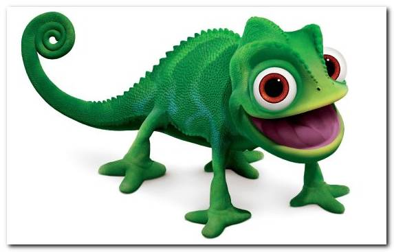 Image Terrestrial Animal Chameleon Scaled Reptile Fauna Iguana