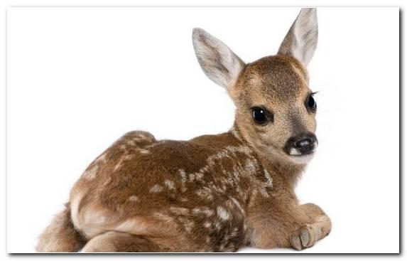 Image terrestrial animal deer fur roe deer dog