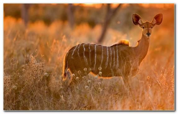 Image terrestrial animal grassland grazing wildlife prairie