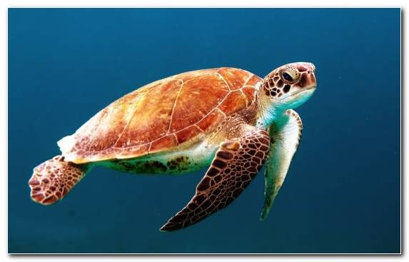 Image terrestrial animal loggerhead emydidae sea turtle green sea turtle