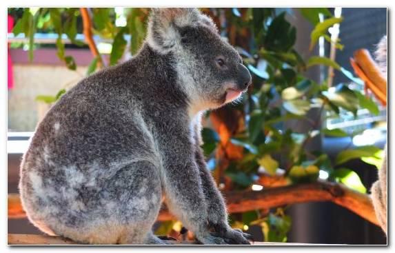 Image Terrestrial Animal Pixel Marsupial Snout Tree