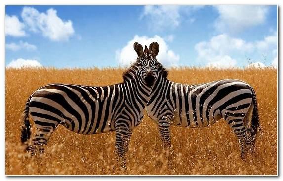 Image Terrestrial Animal Safari Desert Grass Grassland