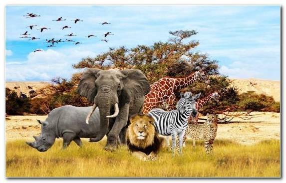 Image Terrestrial Animal Wildlife Ecosystem Leopard Grassland