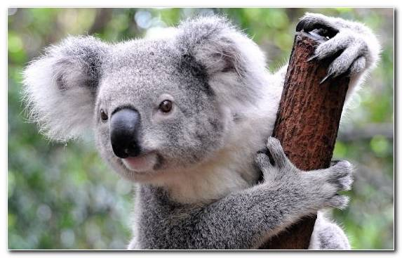 Image Terrestrial Animal Wildlife Fur Animal Marsupial