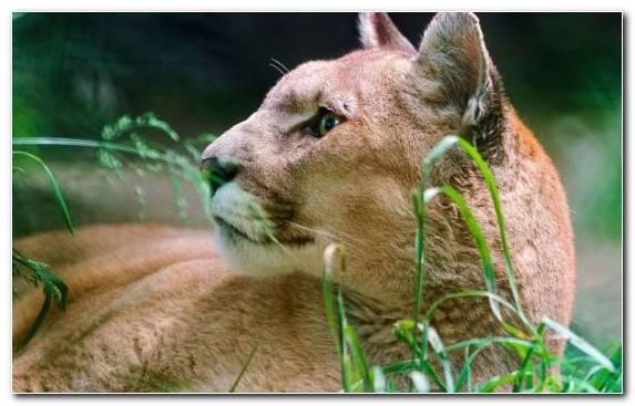 Image Terrestrial Animal Wildlife Organism Fauna Snout