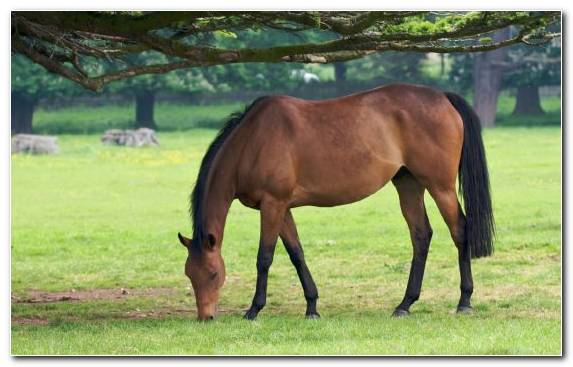 Image Thoroughbred Grazing Foal Stallion Grassland