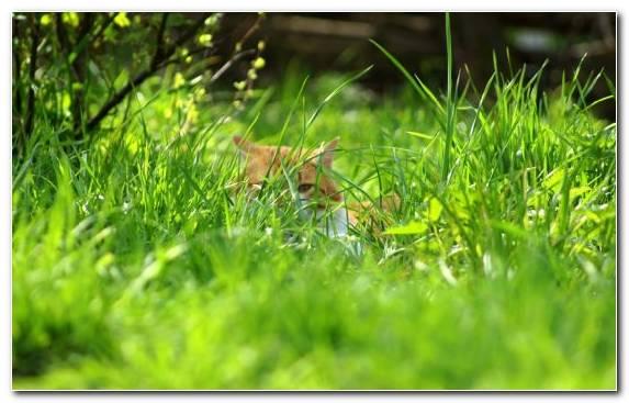 Image Tiger Ecosystem Plant Spring Kitten