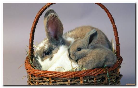 Image Tiger Moustache Rabits And Hares Whiskers Hare