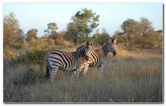 Image Tourism Desert Grassland Park Wildlife