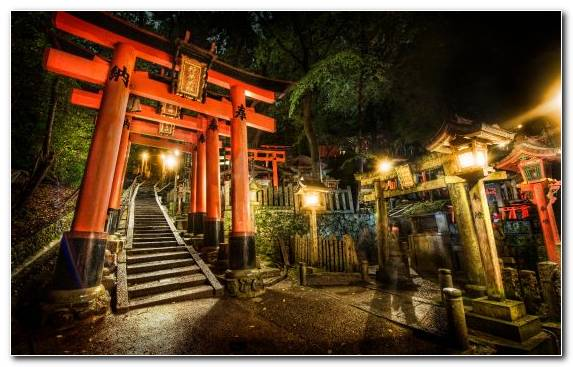 Image Tourist Attraction Japan Evening Tree Shrine