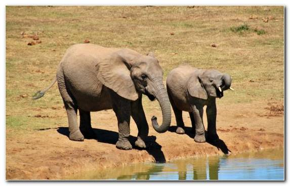 Image Travel Africa Nature National Park African Bush Elephant