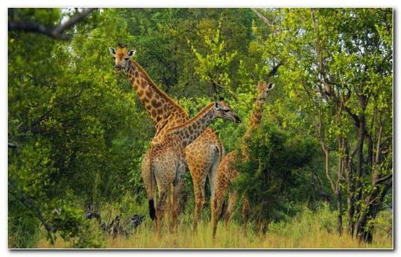 Image Travel Ecosystem Grassland Desert Tourism