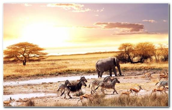 Image Travel Herd Accommodation Sabi Sabi Kruger National Park