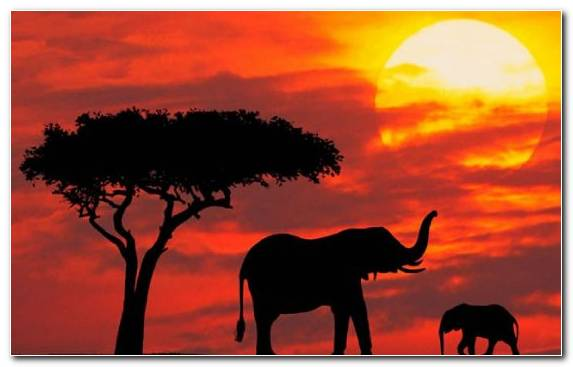 Image Travel Tourism Elephants And Mammoths Silhouette Savanna