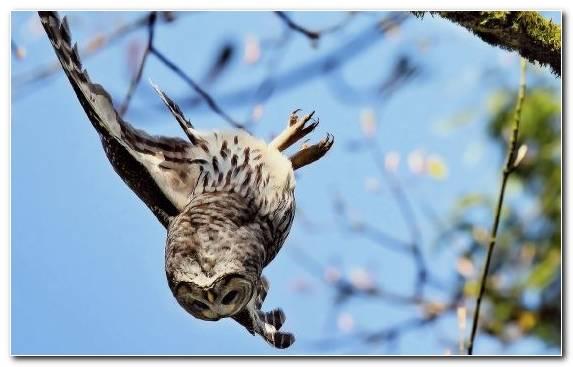 Image tree branch bird of prey buzzard hawk