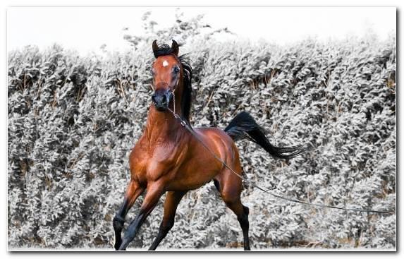 Image tree bridle bay stallion horse tack