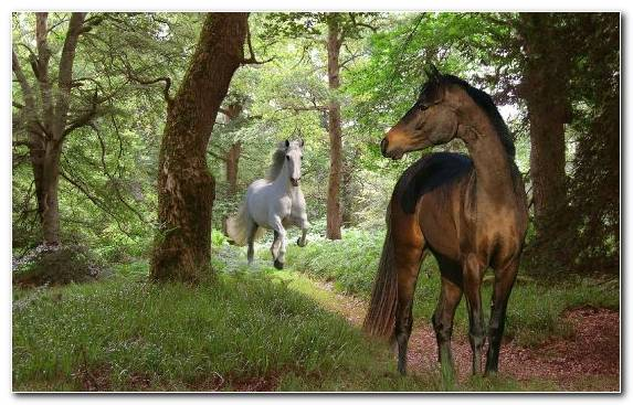Image Tree Chestnut Horses Canter And Gallop Ecosystem