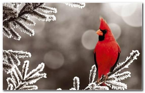 Image Tree Clip Art Season Branch Beak