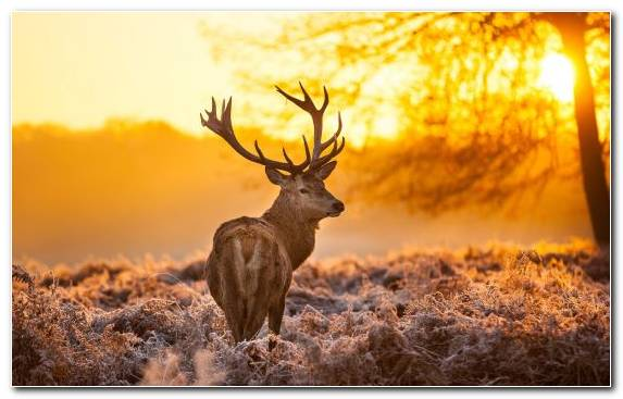 Image tree grass grasses wildlife deer