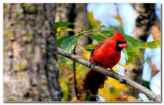 Image tree leaf wildlife beak branch