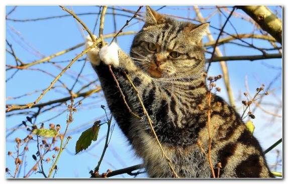 Image tree scottish fold fauna flora branch