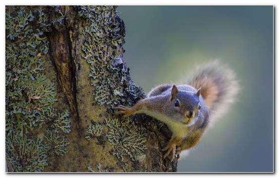 Image Tree Squirrel Chipmunk Wildlife Eastern Gray Squirrel Rodent