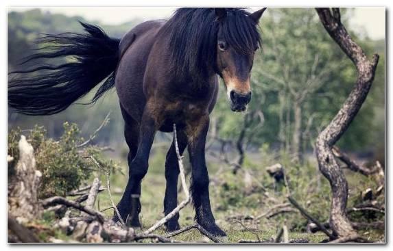 Image Tree Stallion Mane Wild Horse Horses