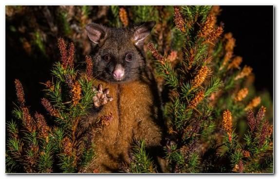 Image tree terrestrial animal snout viverridae wildlife