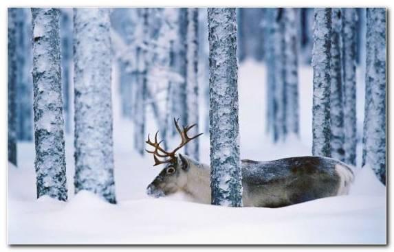 Image Tree Wildlife Ded Moroz Freezing Winter