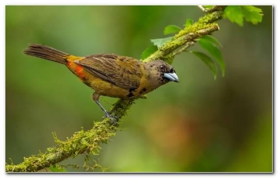 Image Tree Wing Wildlife Branch Old World Flycatcher