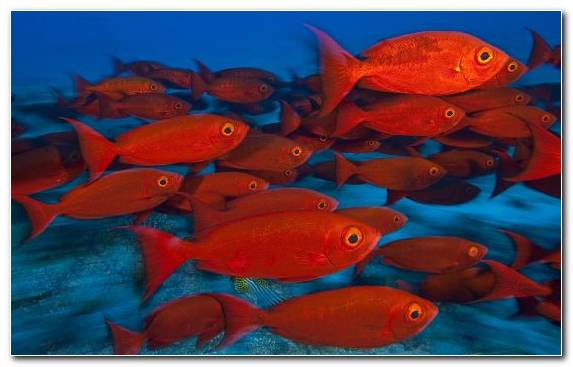 Image Tropical Fish Water Seafood Coral Reef Fish Underwater