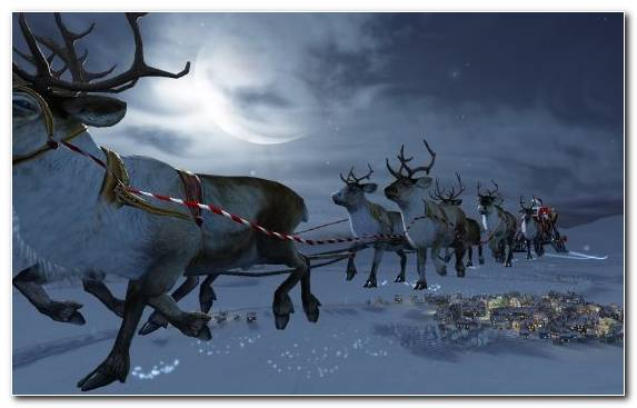 Image tundra deer freezing snow Christmas Day