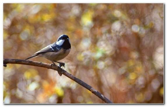 Image Twig Perching Bird Wildlife Bird Cat