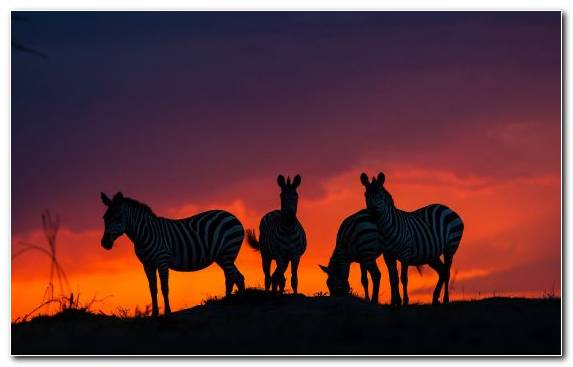 Image Twilight Evening Sky Sunset African Elephant