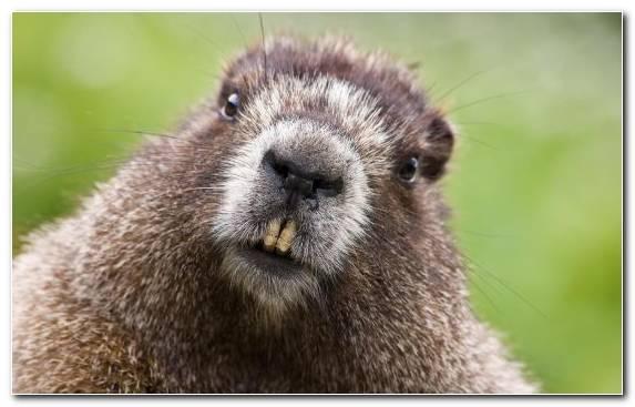 Image Ubuntu Rodent Mammal Snout Fauna