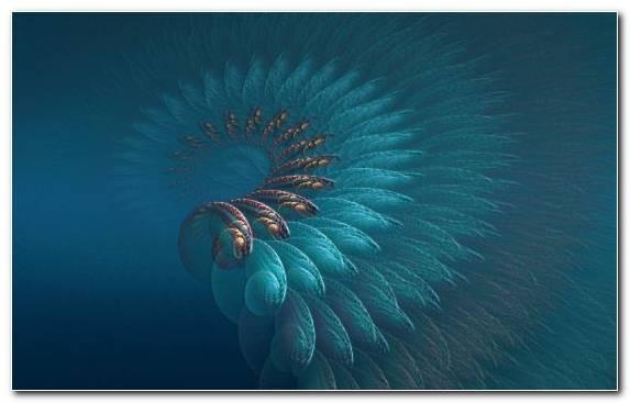 Image Underwater Art Graphics Drawing Marine Biology