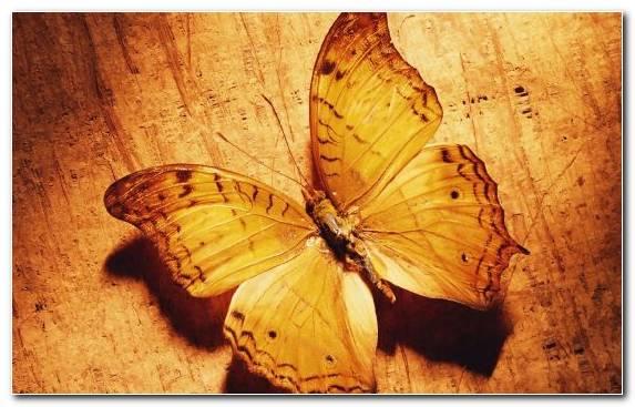 Image vector graphics butterfly invertebrate pollinator cuteness