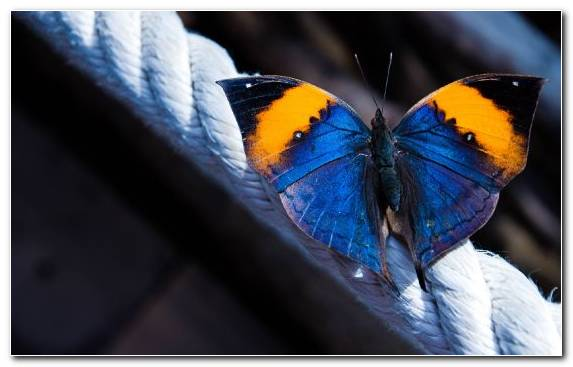 Image Vector Graphics Invertebrate Brush Footed Butterfly Arthropod Lycaenid