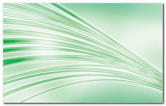 Image Vector Graphics White Graphics Leaf Grass