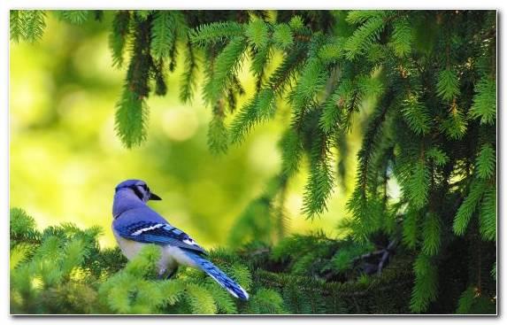 Image vegetation bird beak nature reserve tree