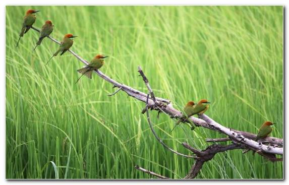 Image Vegetation Grass Family Beak Ecosystem Bird