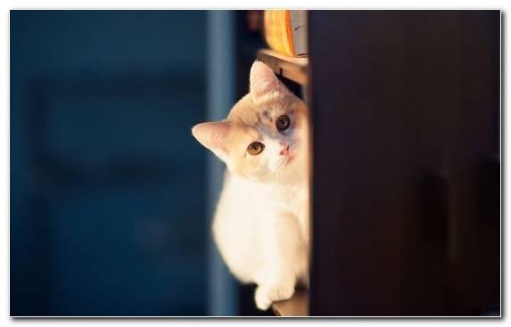 Image Vertebrate Kitten Devon Rex Feral Cat Cuteness
