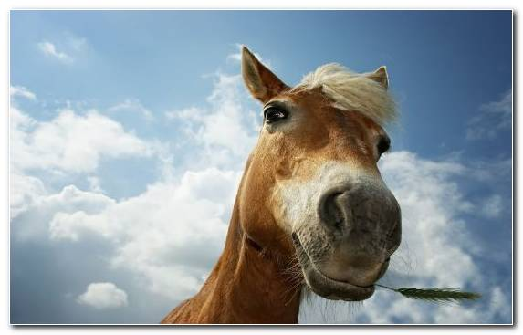 Image Video Games Horse Stallion Snout Mane