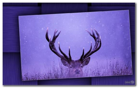 Image Violet Purple Deer Graphics White Tailed Deer