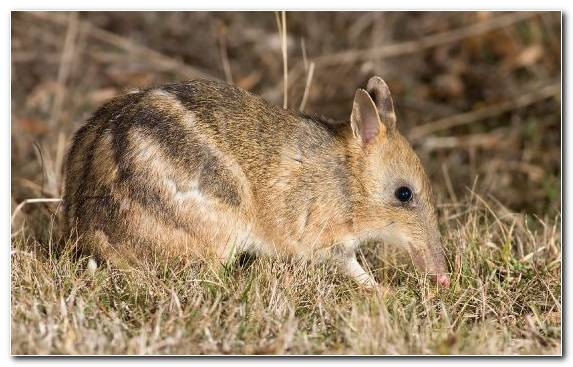 Image wallaby snout grasses grass marsupial