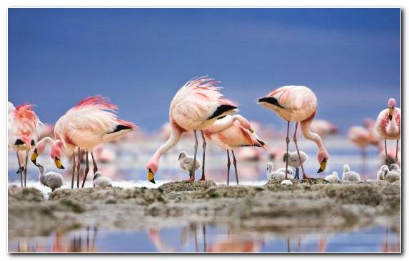 Image Water Bird Water Beak Book Flamingo