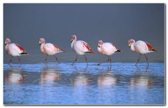 Image Water Bird Water Bird Flamingo Ciconiiformes