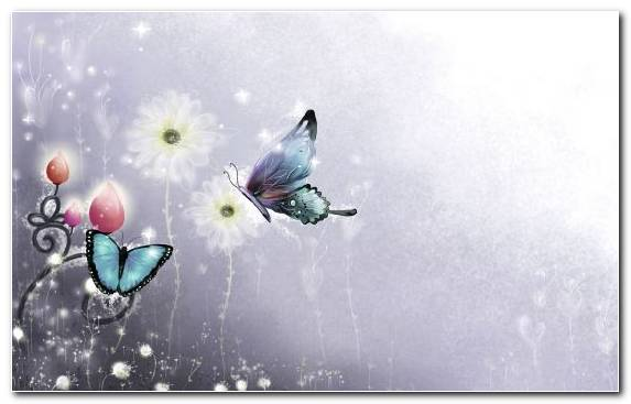 Image Water Pollinator Moths And Butterflies Butterfly Graphics